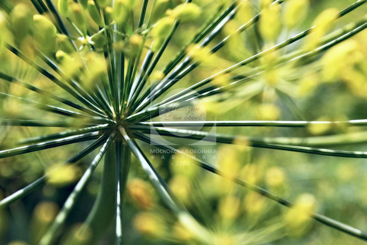 Цветы p6003 366 фотообои на флизелиновой